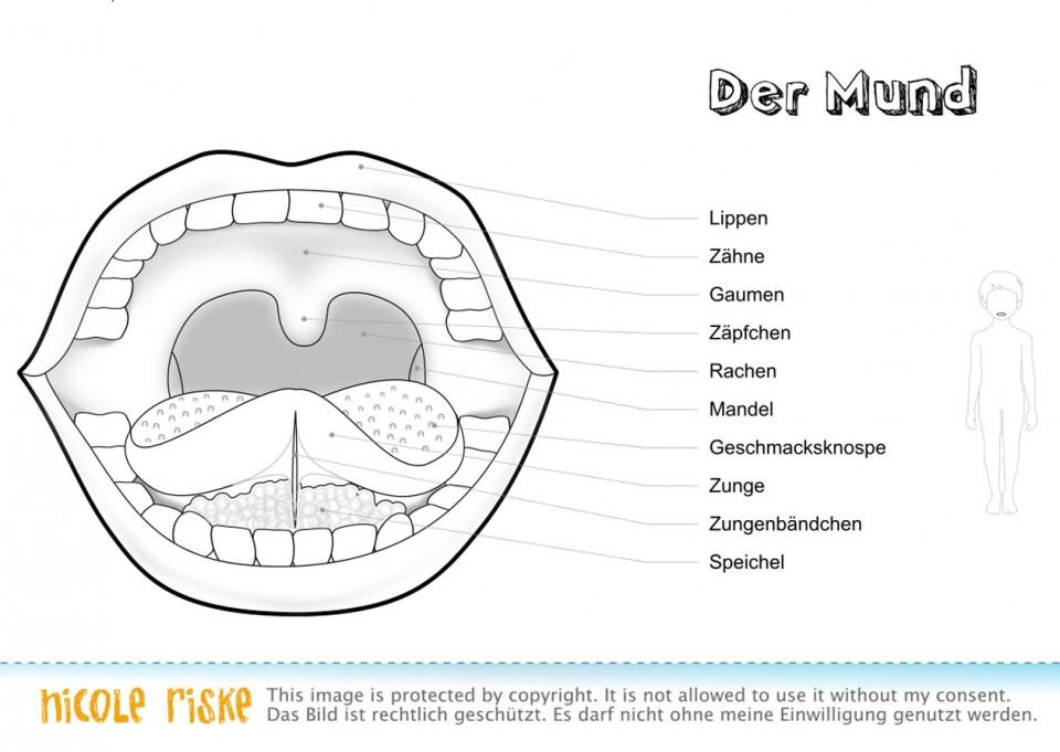Ausmalbilder Fur Die Schule Thema Menschliche Organe Nicole Riske Grafik Illustration Aus Berlin